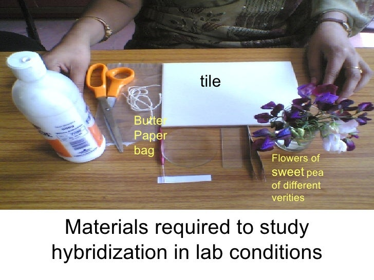Materials required to study hybridization in lab conditions tile Flowers of  sweet  pea of different verities Butter  Pape...