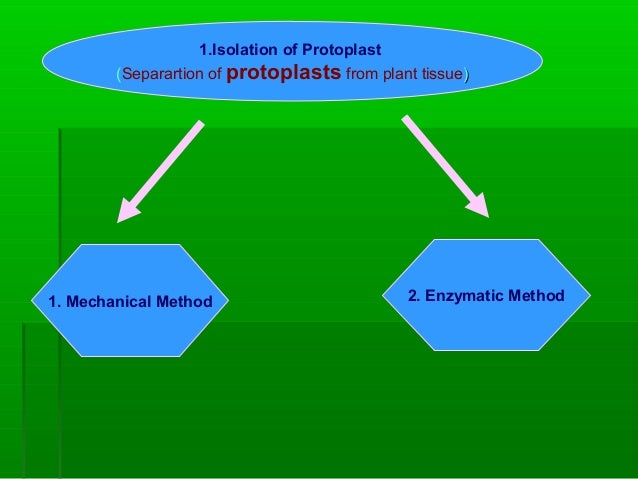 1.Isolation of Protoplast (Separartion of protoplasts from plant tissue)) 1. Mechanical Method 2. Enzymatic Method