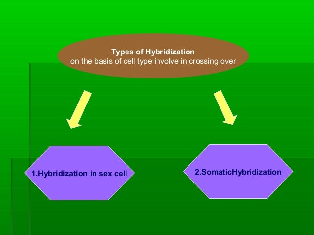Types of Hybridization on the basis of cell type involve in crossing over 2.SomaticHybridization1.Hybridization in sex cell