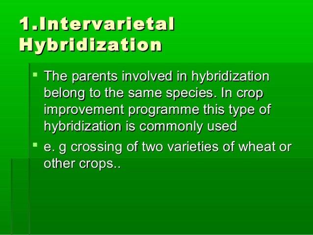 1.Intervarietal1.Intervarietal HybridizationHybridization  The parents involved in hybridizationThe parents involved in h...