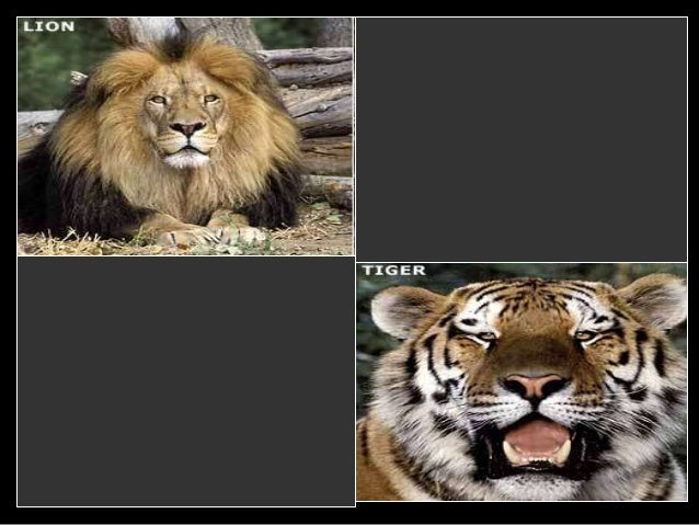 Animal Hybrids Lesson PowerPoint, Taxonomy and ...