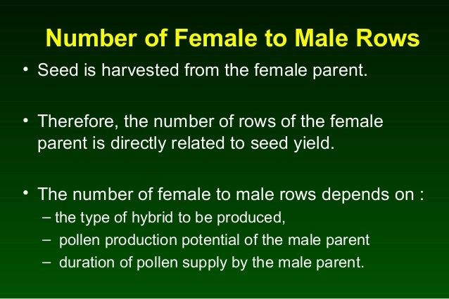 how to produce hybrid maize seed
