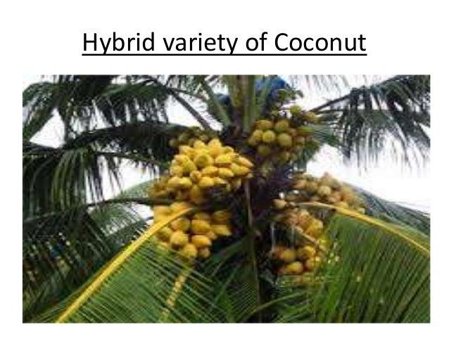 Hybrid Variety Of Plants