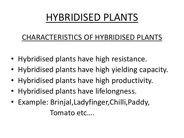 Hybrid Variety Plants