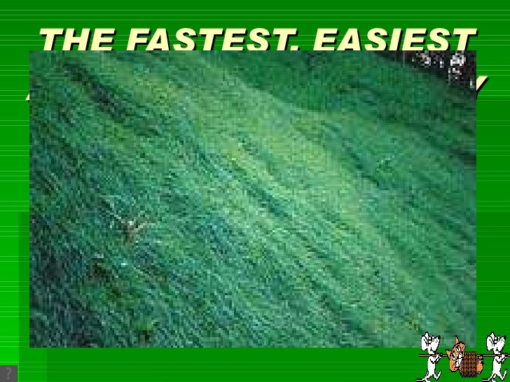 THE FASTEST, EASIEST AND LOWEST COST WAY TO STABALIZE SLOPES BY HYDRO MULCH SEEDING