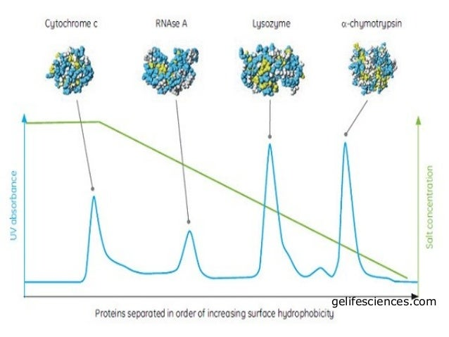Hydrophobic interaction chromatography (1)