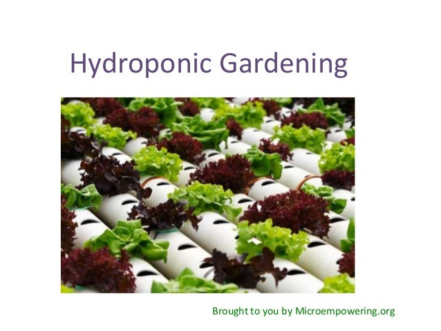 Hydroponic Gardening          Brought to you by Microempowering.org