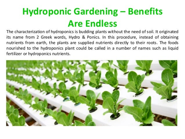 Hydroponic Gardening Benefits Are Endless