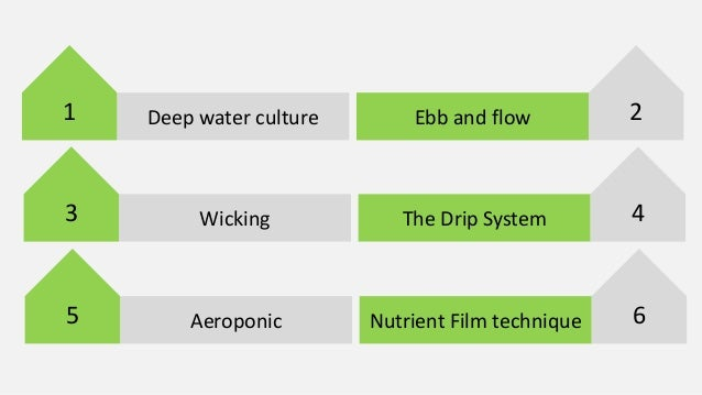 Hydroponic Growing Guide