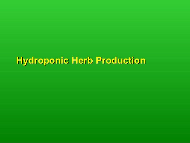 Hydroponic Herb Production