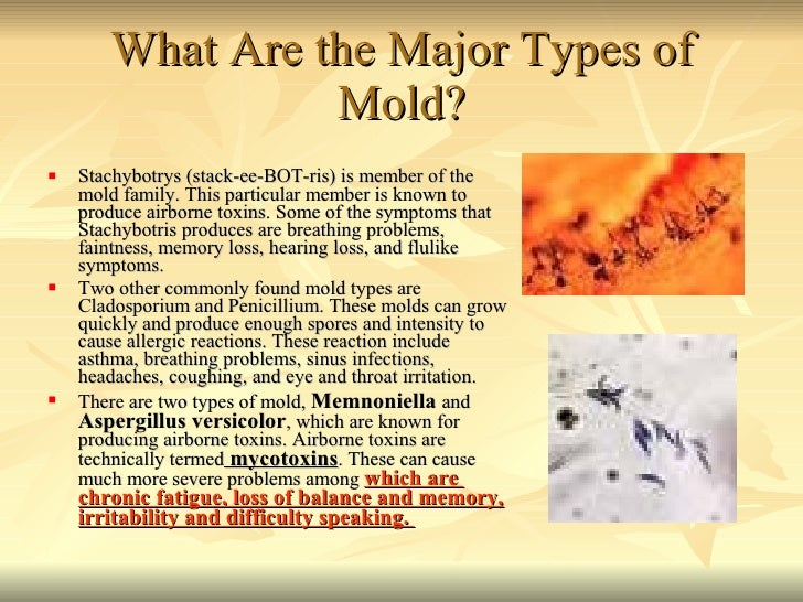 What Are the Major Types of Mold? <ul><li>Stachybotrys (stack-ee-BOT-ris) is member of the mold family. This particular me...
