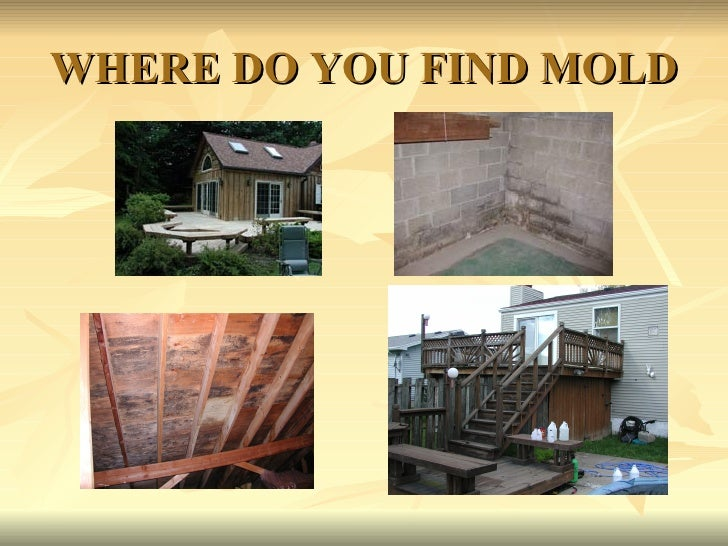 WHERE DO YOU FIND MOLD