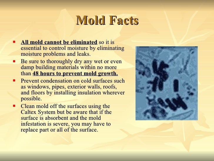 Mold Facts <ul><li>All mold cannot be eliminated  so it is essential to control moisture by eliminating moisture problems ...