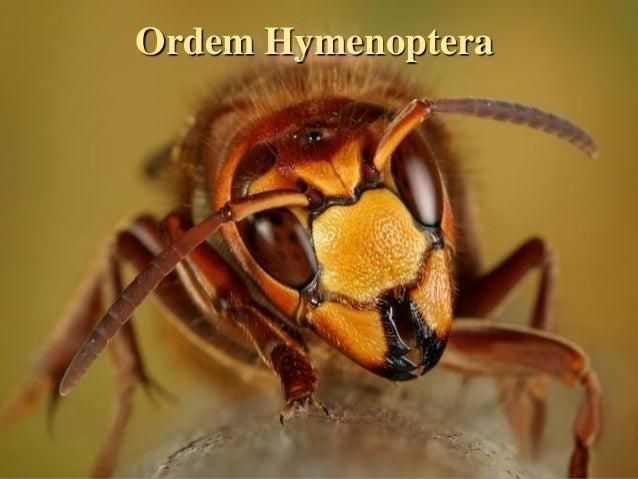 Ordem HymenopteraEntomologia - Unimontes   Prof. Magno Borges