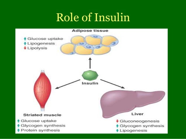 a study of the form and function of insulin Glucagon vs insulin:  bread and pasta have carbohydrates in large form,  glucagon vs insulin: functions & feedback loop related study materials.