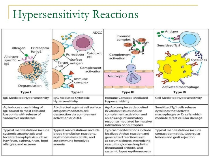 Hypersensitivity reactions lecture notes