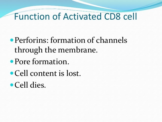 CD8 ( Cytotoxic T Cells) Granzymes: Proteases Degrade protein in cell membrane loss of cell content Cell dies