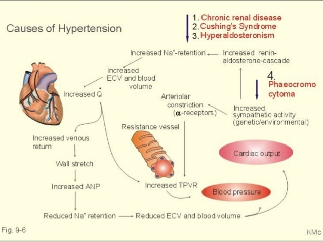 the direct effects of hypertension on the heart Illustration depicting the effects of high blood pressure in most people with established essential hypertension the american heart association estimated the direct and indirect costs of high blood pressure in 2010 as $766 billion.
