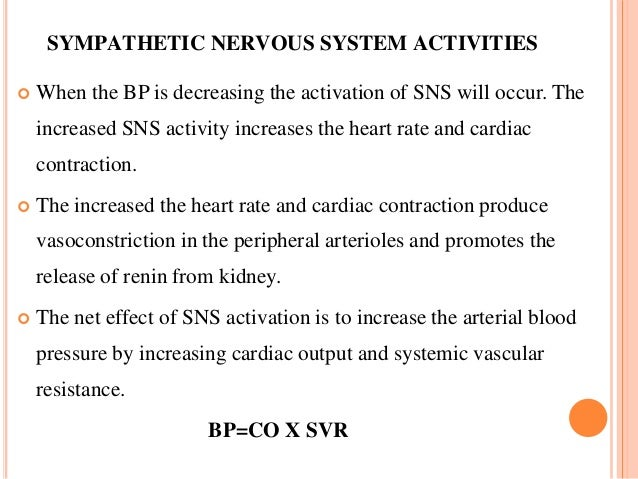 SYMPATHETIC NERVOUS SYSTEM ACTIVITIES  When the BP is decreasing the activation of SNS will occur. The increased SNS acti...