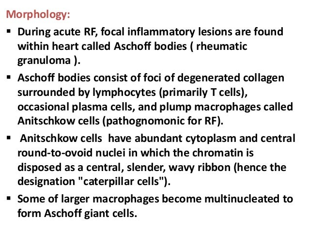 Aschoff bodies may be found in any of three layers ofheart ( pericardium, myocardium, or endocardium )hence the lesion i...