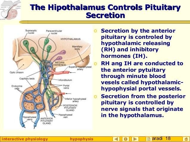 Taradi 18interactive physiology hypophysis The Hipothalamus Controls PituitaryThe Hipothalamus Controls Pituitary Secretio...