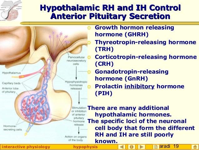 Taradi 19interactive physiology hypophysis Hypothalamic RH and IH ControlHypothalamic RH and IH Control Anterior Pituitary...