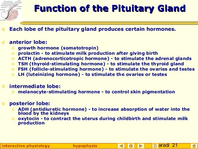 anterior lobe of the pituitary gland function