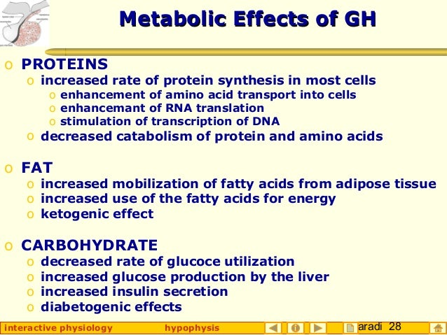 Taradi 28interactive physiology hypophysis Metabolic Effects of GHMetabolic Effects of GH o PROTEINS o increased rate of p...