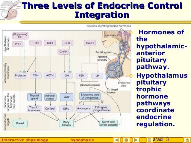Taradi 3interactive physiology hypophysis Three Levels of Endocrine ControlThree Levels of Endocrine Control IntegrationIn...