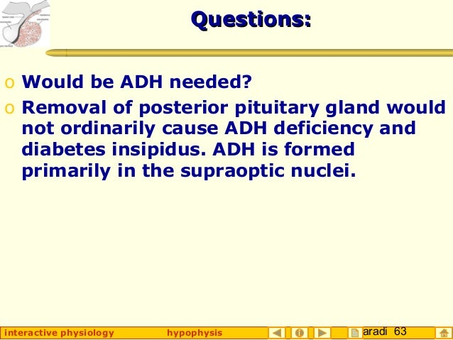 Taradi 63interactive physiology hypophysis Questions:Questions: o Would be ADH needed? o Removal of posterior pituitary gl...
