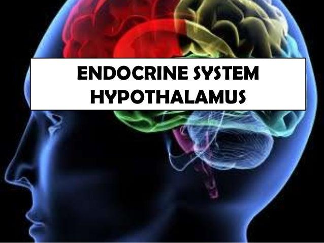 ENDOCRINE SYSTEM HYPOTHALAMUS