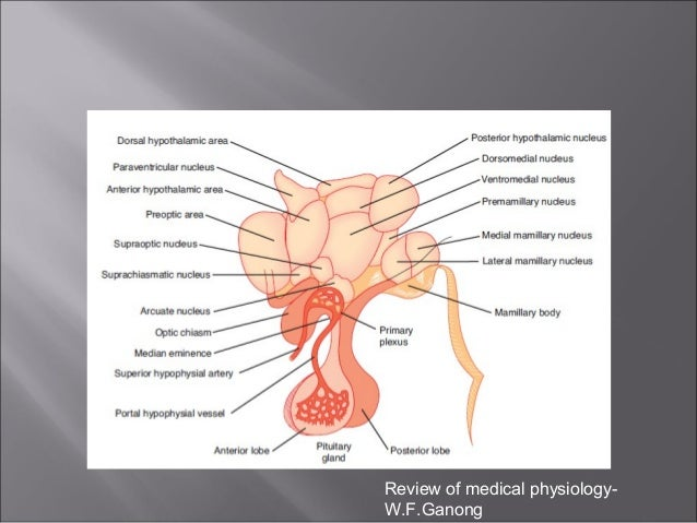 Hypothalamic regulation of visceral and brain functions review of medical physiology wfnong ccuart Gallery