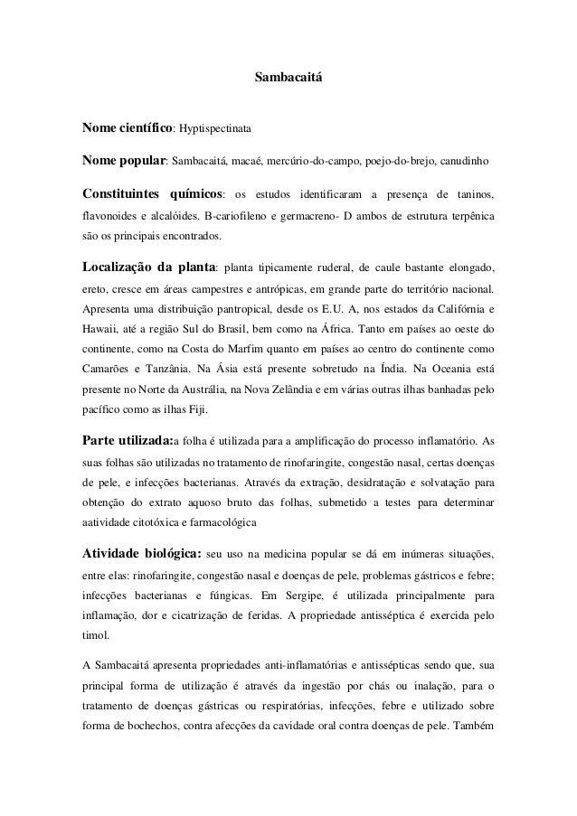 Sambacaitá  Nome científico: Hyptispectinata Nome popular: Sambacaitá, macaé, mercúrio-do-campo, poejo-do-brejo, canudinho...