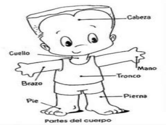 Aprendiendo A Reconocer Las Partes Del Cuerpo Para Niños