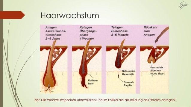 Haarwachstum Ziel: Die Wachstumsphasen unterstützen und im Follikel die Neubildung des Haares anregen!