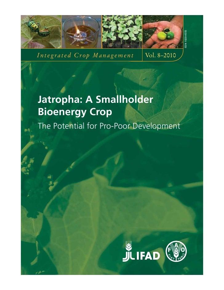 ISSN 1020-4555Integrated Crop Management   Vol. 8–2010Jatropha: A SmallholderBioenergy CropThe Potential for Pro-Poor Deve...
