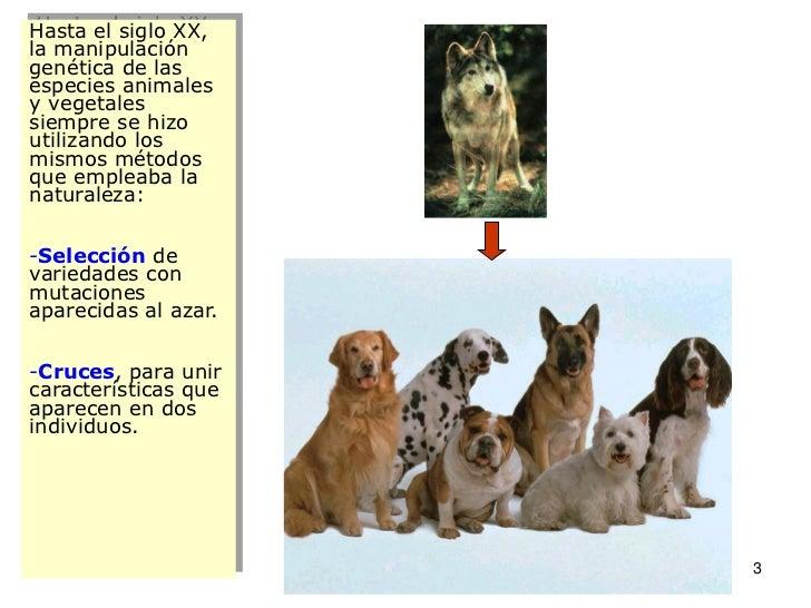 I12 gen apli_pdf1 Slide 3