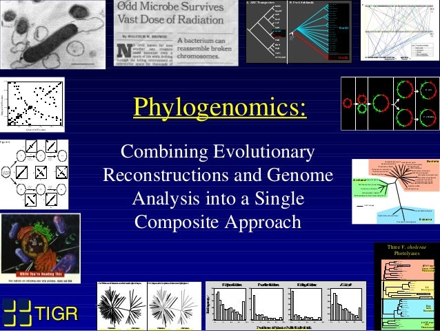 TIGRTIGR Phylogenomics: Combining Evolutionary Reconstructions and Genome Analysis into a Single Composite Approach 0 2500...