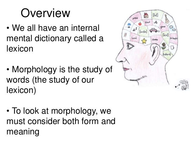 Morphology Dr Sabri alkatib