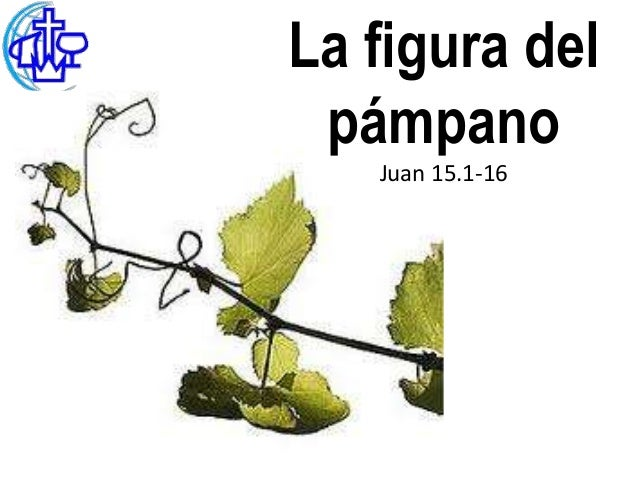 La figura del pámpano   Juan 15.1-16
