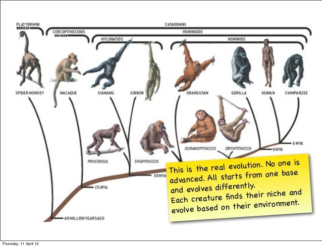 is                        This is the real  evolution. No one                                                             ...