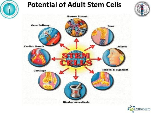 Adult Stem Cells In Orthopaedics