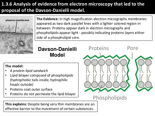 evidence for and against the davson danielli Summary this chapter reviews some basic biochemical properties of membrane lipids and describes the experimental evidence for models of the structure of cell membranes, starting with the gorter and grendel bimolecular phospholipid leaflet and proceeding through the davson–danielli paucimolecular model and the singer–nicholson fluid.