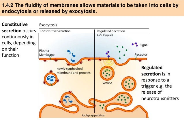 Ib biology 14 slides cell transport 3 ccuart Image collections