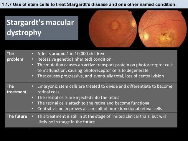Ib Biology 1 6 Amp 1 1 Slides Mitosis Amp Stem Cells