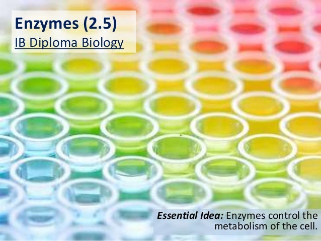 Enzymes (2.5) IB Diploma Biology Essential Idea: Enzymes control the metabolism of the cell.