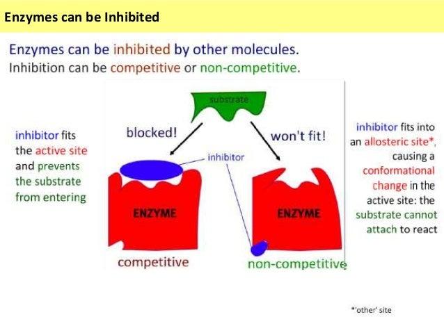 ib enzyme lab ideas