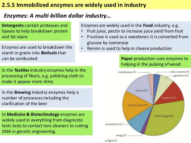 Industrial uses of enzymes essay writer