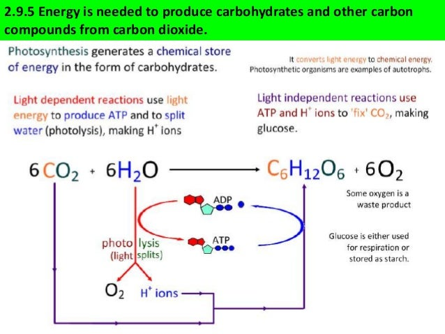 Ib biology 29 slides photosynthesis ccuart Choice Image