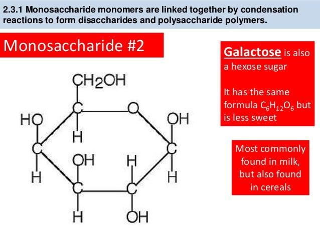 Ib Biology 23 Slides Lipids Carbohydrates